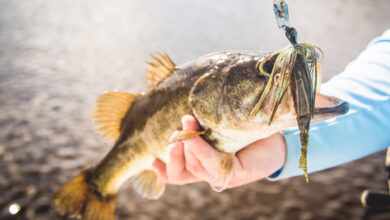 Photo of What Is a Chatterbait? Here is Everything you May Need to Know