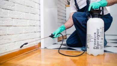 Photo of 8 Pest Control Tips for Apartment Tenants