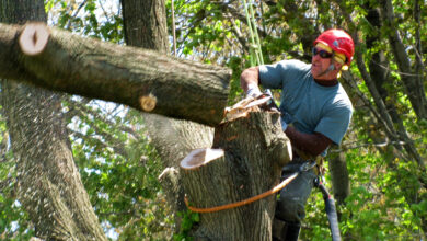 Photo of Top 10 Questions to Ask When Hiring a Tree Service