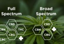 Photo of Full Spectrum vs Broad Spectrum CBD: What's the difference?